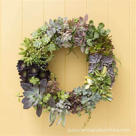 How to Make a Living Succulent Wreath - Succulents and