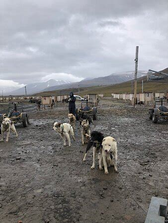Svalbard Husky (Longyearbyen) - 2020 All You Need to Know