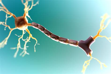 Myelin Repair in Multiple Sclerosis: A Focus for Research