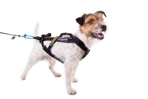 Leash for Dogs >>> You can get more details by clicking on